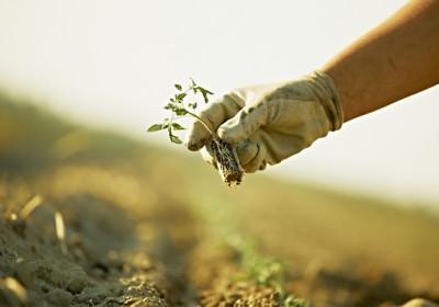Scelta delle sementi